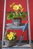 Gruppe verschiedene Gartenblumen Stockfoto