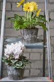 Gruppe verschiedene Gartenblumen Stockbild