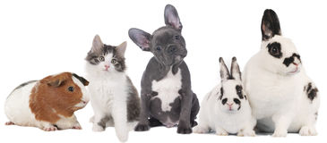 Gruppe verschiedene Haustiere stockfotos