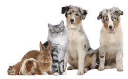 Gruppe verschiedene Haustiere stockbilder