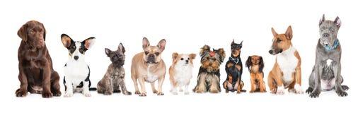 Gruppe verschiedene Hunde stockfotografie
