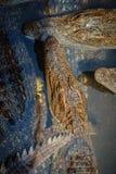Gruppe vieler Krokodile aalen sich im konkreten Teich Croco Stockbilder