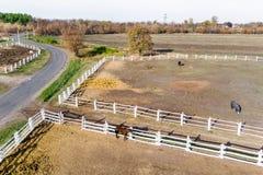 Gruppe vollblütige Pferde, die in der Koppel nahe Stall gehen und weiden lassen Langer Glättungsnachmittagsschatten Schöne Tiere  lizenzfreies stockbild