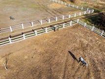 Gruppe vollblütige Pferde, die in der Koppel nahe Stall gehen und weiden lassen Langer Glättungsnachmittagsschatten Schöne Tiere  stockfotografie