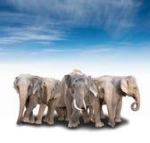 Gruppe von Asien-Elefanten Stockfotografie