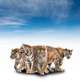 Gruppe von Bengal-Tiger Lizenzfreies Stockbild