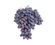 Gruppe von blauen Trauben auf einem weißen Hintergrund Stockfotos
