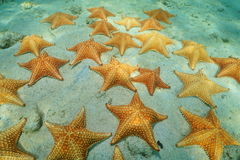 Gruppe von den Starfish Unterwasser auf sandigem Meeresgrund Stockfotos