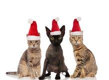 Gruppe von drei netten Katzen, die Weihnachtsmann-Hüte tragen lizenzfreies stockfoto