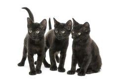 Gruppe von drei schwarzen Kätzchen, die in der gleichen Richtung schauen Lizenzfreies Stockbild