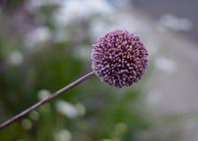 Gruppe von kleinen Blumen Lizenzfreie Stockbilder