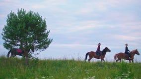 Gruppe von Personen auf den Pferden, die auf das Feld galoppieren stock footage