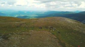 Gruppe von Personen an den Reitenreisen in Altai-Bergen clip Touristische Gruppe von Personen zieht zu Pferd entlang um stock footage