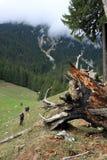 Gruppe von Personen, die dem Pfad herauf den Berg folgt Lizenzfreies Stockfoto