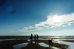 Gruppe von Personen mit ihren Hunden am Strand stockfotografie
