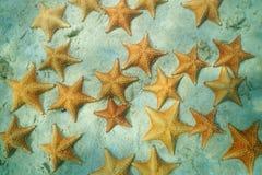 Gruppe von Starfish unter dem Wasser auf dem Sand Stockbilder