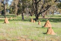 Gruppe von Termiten-Hügeln Stockfotografie
