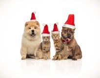Gruppe von vier Sankt-Katzen und von Hunden der unterschiedlichen Zucht lizenzfreie stockfotos