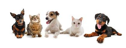 Gruppe Welpen und Katzen Stockfotografie