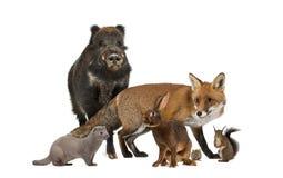 Gruppe wilde Tiere lizenzfreies stockfoto