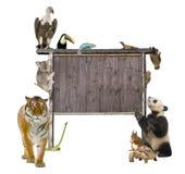 Gruppe wilde Tiere um ein unbelegtes hölzernes Zeichen Stockbild