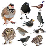 Gruppe wilde Vögel Lizenzfreies Stockfoto