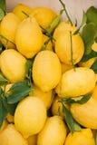 Gruppe Zitronen Lizenzfreie Stockfotografie