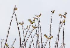 Gruppe Zweige mit Blättern bedeckte versenkt mit tiefer Schicht von i Lizenzfreie Stockbilder