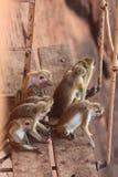 Gruppen av apor sitter på timra Arkivfoto
