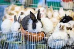 """Gruppen av behandla som ett barn förtjusande rabbitภ"""", Arkivfoto"""