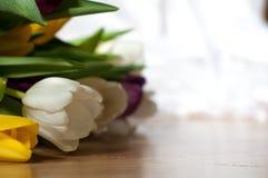 gruppen av den nya lila-, guling- och vittulpan blommar tätt upp Mjuk fokus och bokeh Royaltyfria Foton