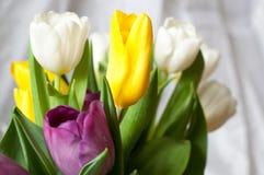 gruppen av den nya lila-, guling- och vittulpan blommar tätt upp Mjuk fokus och bokeh Arkivbild