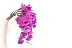Gruppen av den rosa phalaenospisorkidén blommar i en vas som isoleras på vit Royaltyfria Bilder