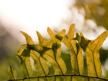 Gruppen av det gröna bladet under solljus illustrerar tillväxt Arkivfoto