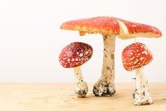Gruppen av flugsvamp plocka svamp på vit bakgrund Royaltyfri Foto