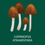 Gruppen av gemensamt färgpulver Caps den giftiga champinjonen i löst sökt efter föda för skog, vektor isolerade ätliga naturliga  stock illustrationer
