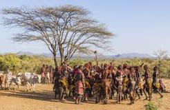 Gruppen av Hamar kvinnor dansar på tjurbanhoppningceremoni Turmi Omo dal, Etiopien Royaltyfri Fotografi