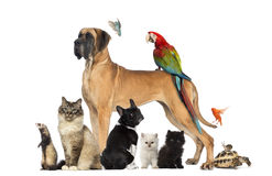Gruppen av husdjur - förfölja, katten, fågeln, reptilen, kanin Royaltyfri Bild