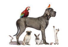 Gruppen av husdjur - förfölja, katten, fågeln, reptilen, kanin Royaltyfria Foton