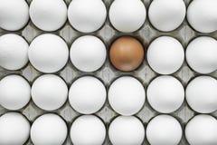 Gruppen av identiska fega ägg except en Fotografering för Bildbyråer