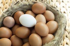 Gruppen av identiska fega ägg except en Royaltyfri Fotografi