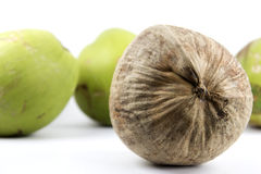 Gruppen av kokosnöten med skillnader bryner framtill fotografering för bildbyråer