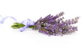 Gruppen av lavendel blommar med satängbandet Arkivfoto