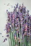 Gruppen av lavendel blommar på en vit bakgrund Arkivbild
