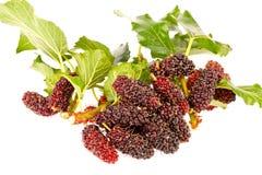 Gruppen av mulberrys bär frukt in isolerat på vit Arkivfoto