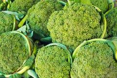 Gruppen av ny broccoli stänger sig upp Royaltyfria Foton
