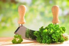 Ny parsley med ett hugga av blad arkivbild