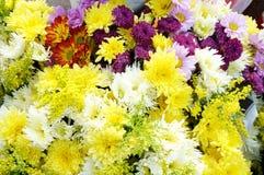 Gruppen av olik färg blommar att blomma Arkivfoton