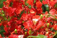 Gruppen av röda blommor Royaltyfri Fotografi