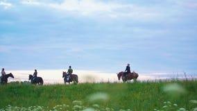 Gruppen av ryttare på hästrygg rider framåtriktat fältet på solnedgången stock video